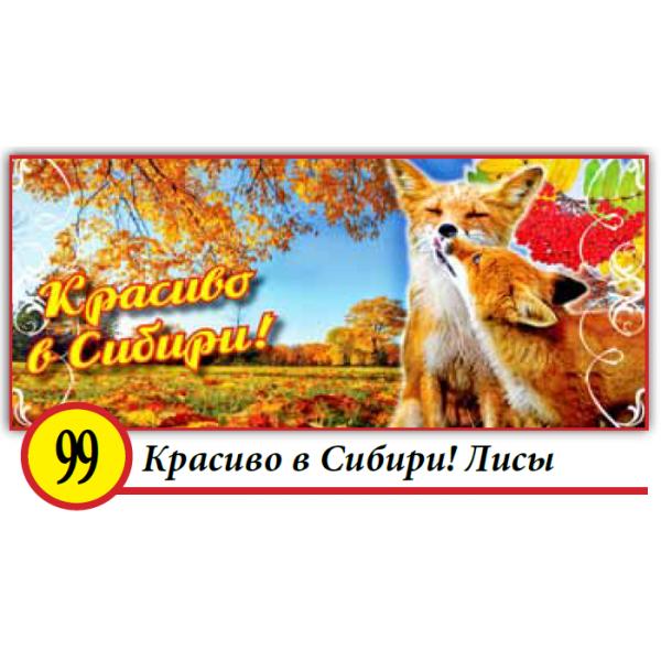 99. Красиво в Сибири! Лисы